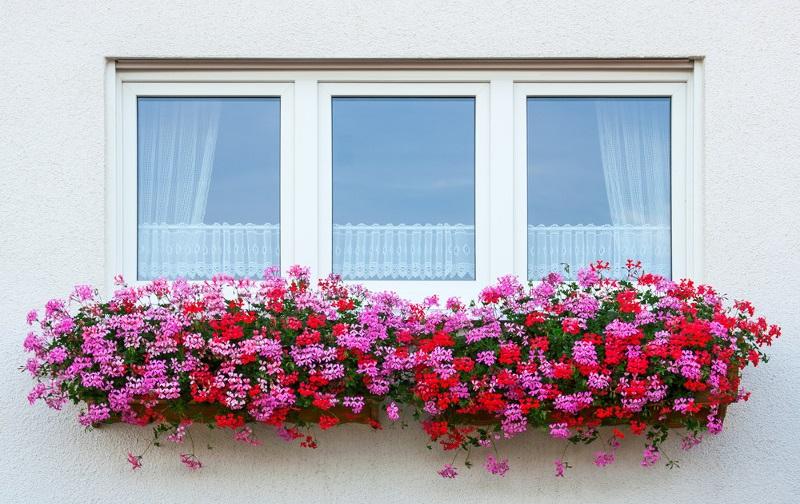Astuces déco : Comment ornementer vos façades avec des plantes ?