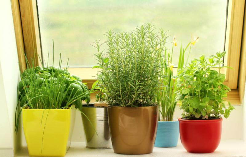 Des herbes aromatiques
